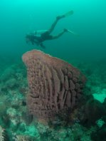 Huge sponges under water